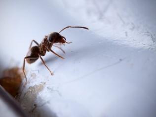 Pest Predator, LLC image 2