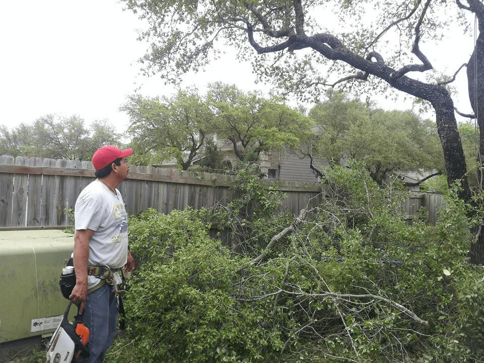 Almanza Tree Trimming Service & More image 4