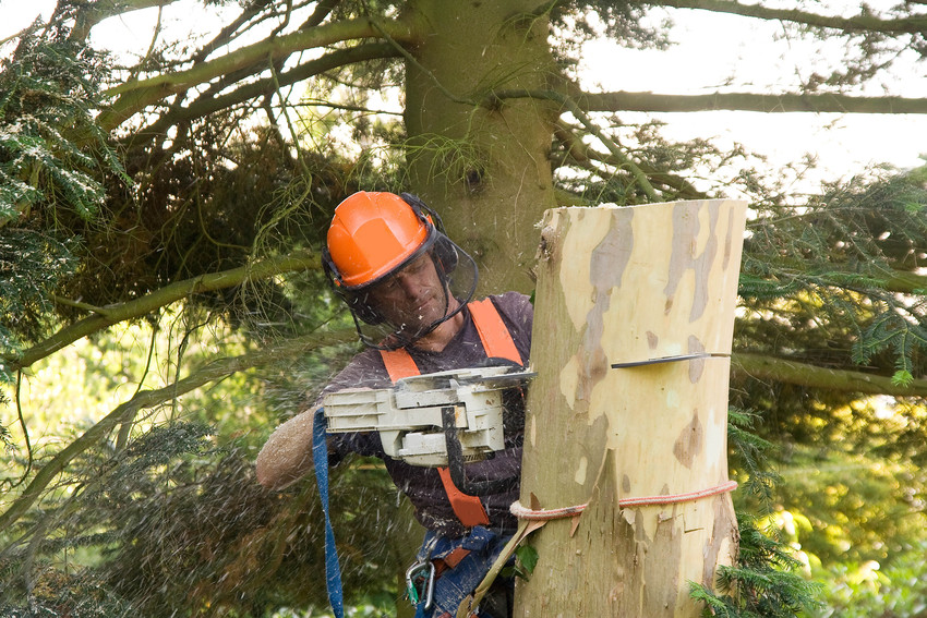 Affordable Tree Service image 1
