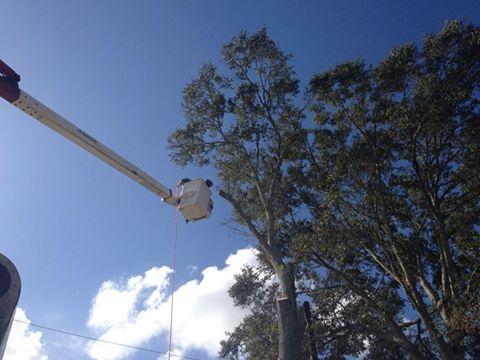S & L Tree Service & Stump Grinding image 4