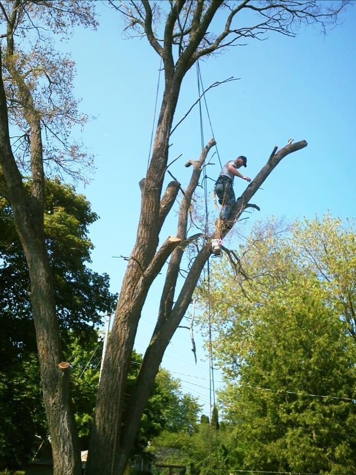 A-1 Tree Service, LLC image 0