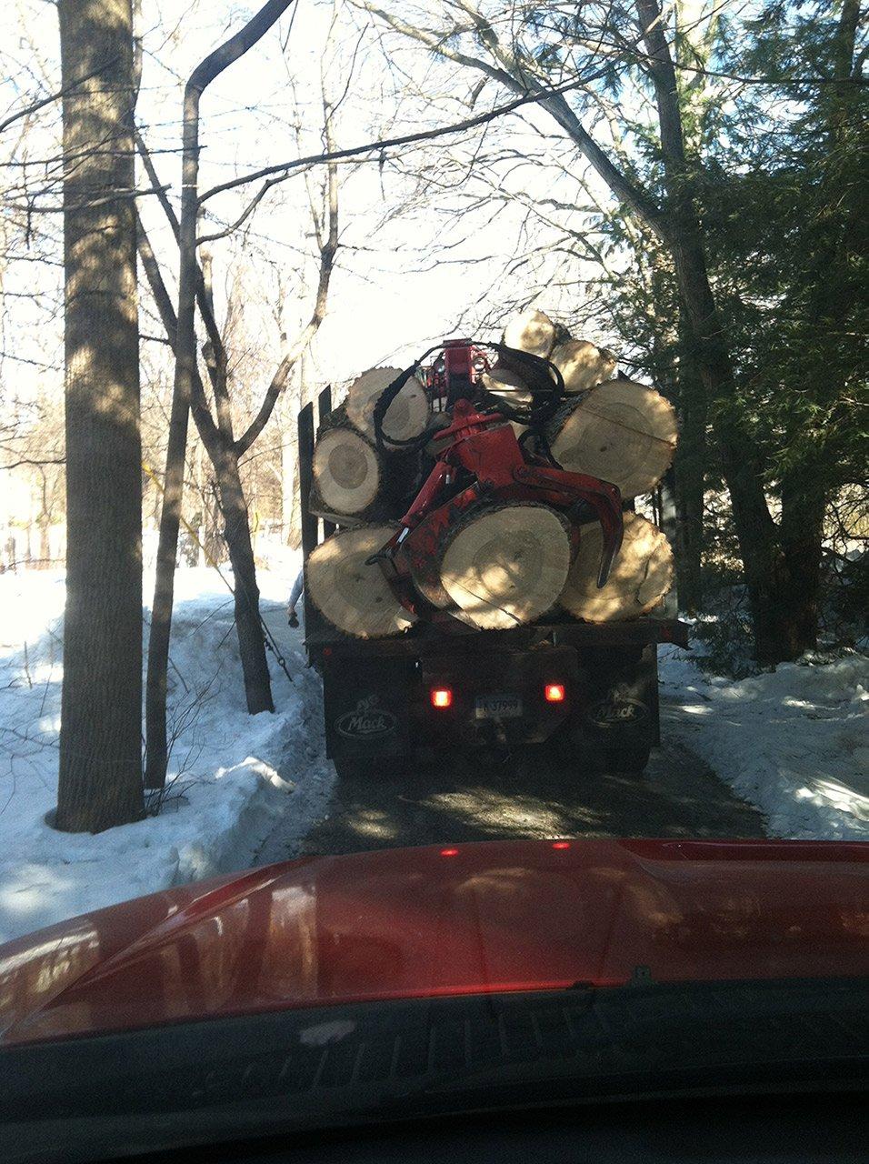 White Hills Tree Removal LLC image 7