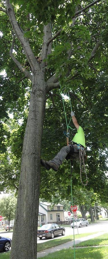 Hoffmann Tree Service image 2
