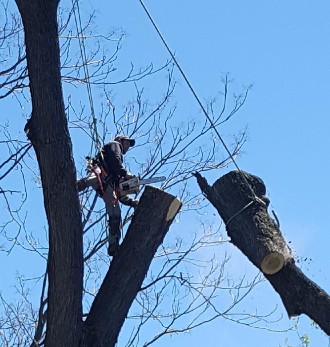 Coffman's Tree Service image 38