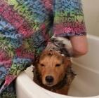 Clip N' Dip Pet Grooming image 6