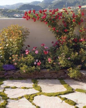 Acov Landscaping image 13