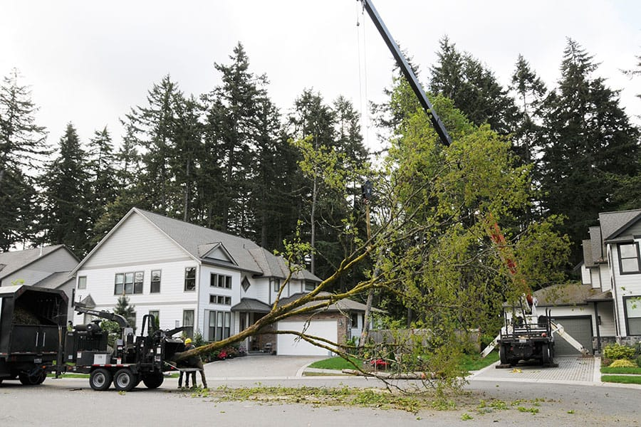 Archon Tree Services, Inc. image 5