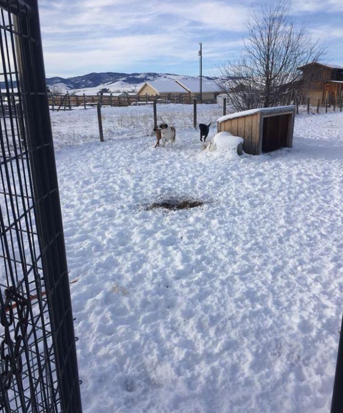Doggie Daycare & Motel image 16