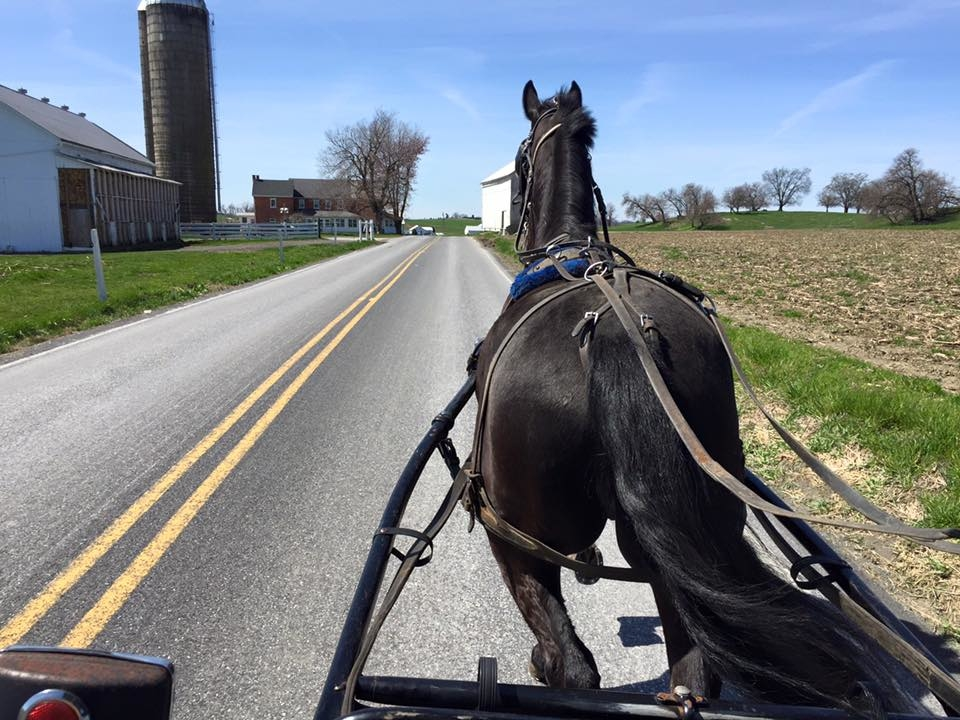 A is for Amish Buggy Rides image 5