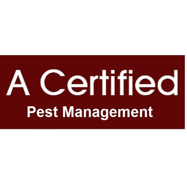 A Certified Termite & Pest Pros