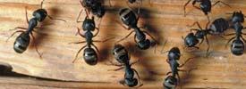 Davis Termite & Pest Control image 2