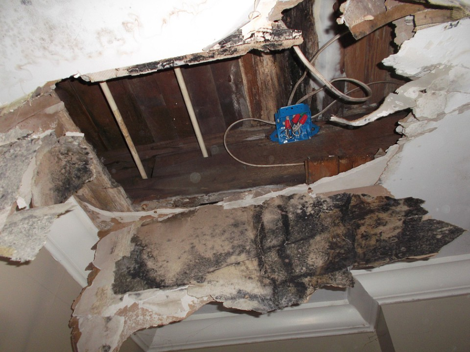 Can you spot the mold? Don't worry. SERVPRO is here to help,