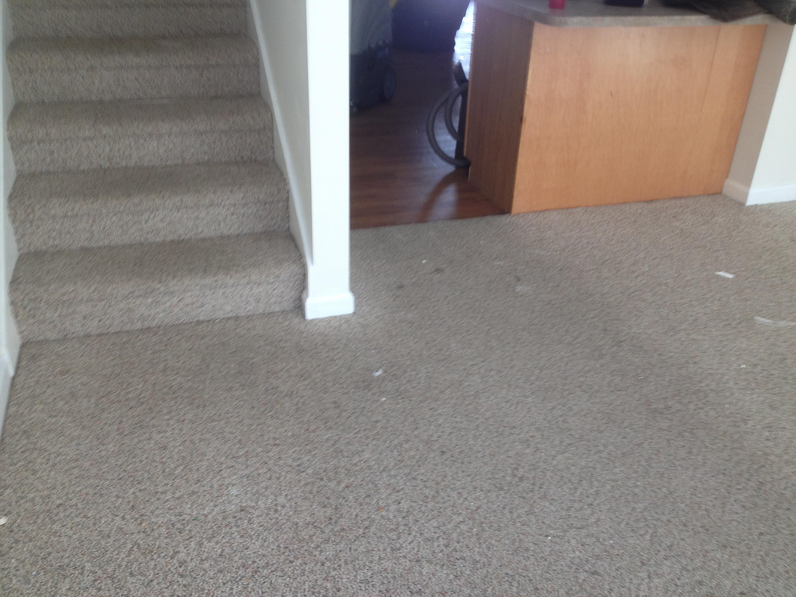 D&D Carpet Cleaning image 14