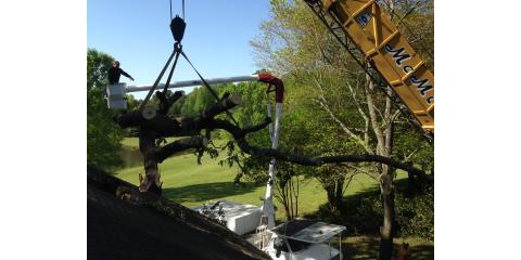 Childers Tree Service image 3