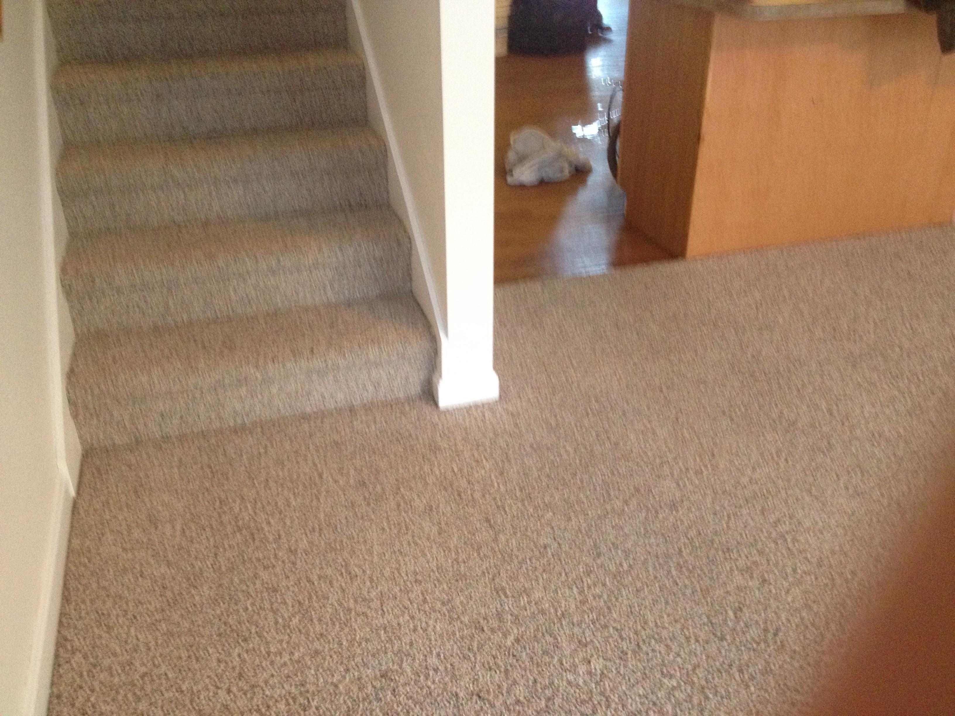 D&D Carpet Cleaning image 15
