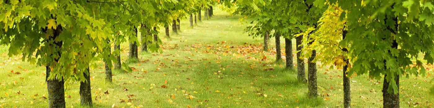 Quality Tree Experts Inc. image 0