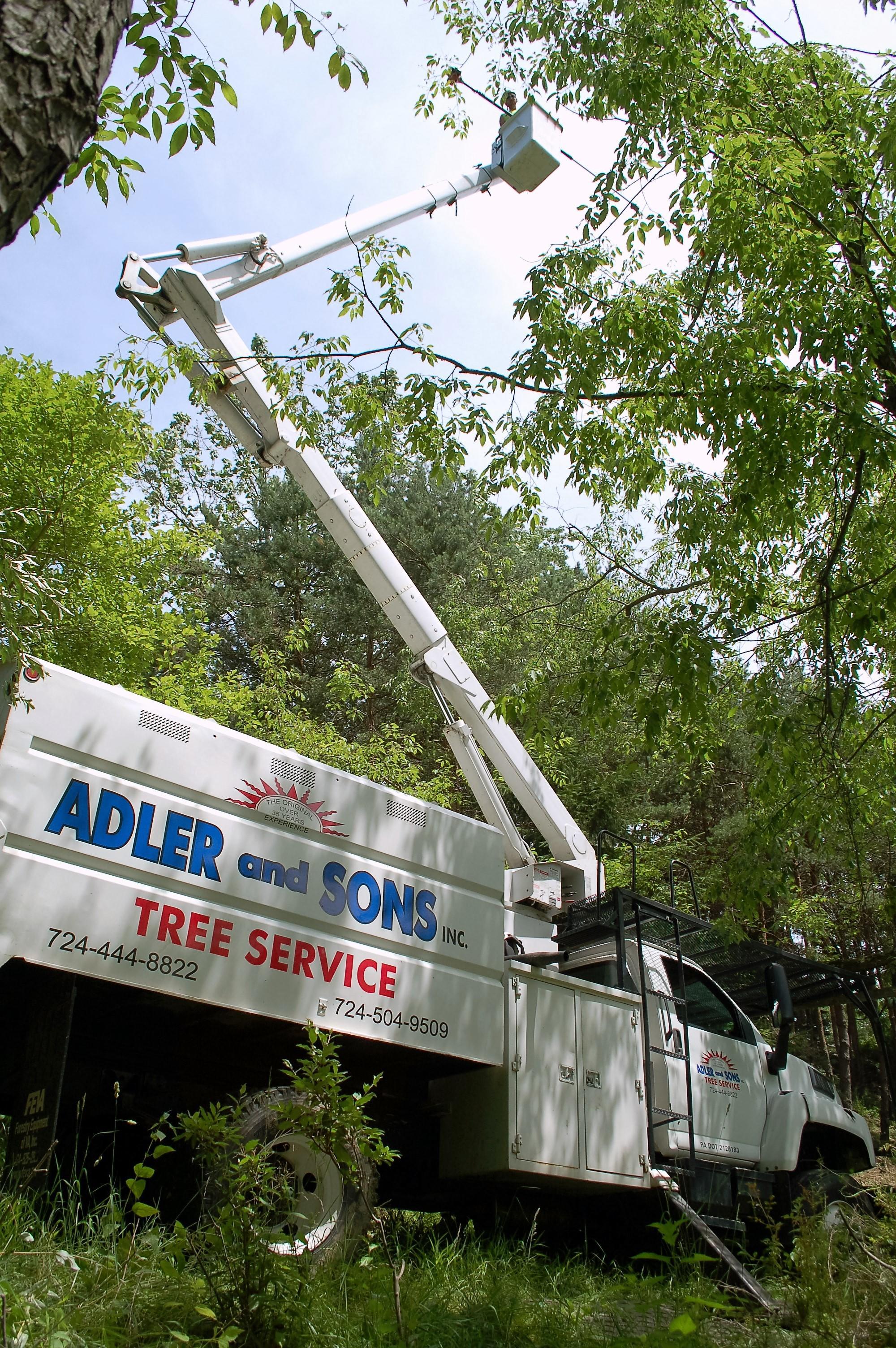 Adler & Sons, Inc. image 5