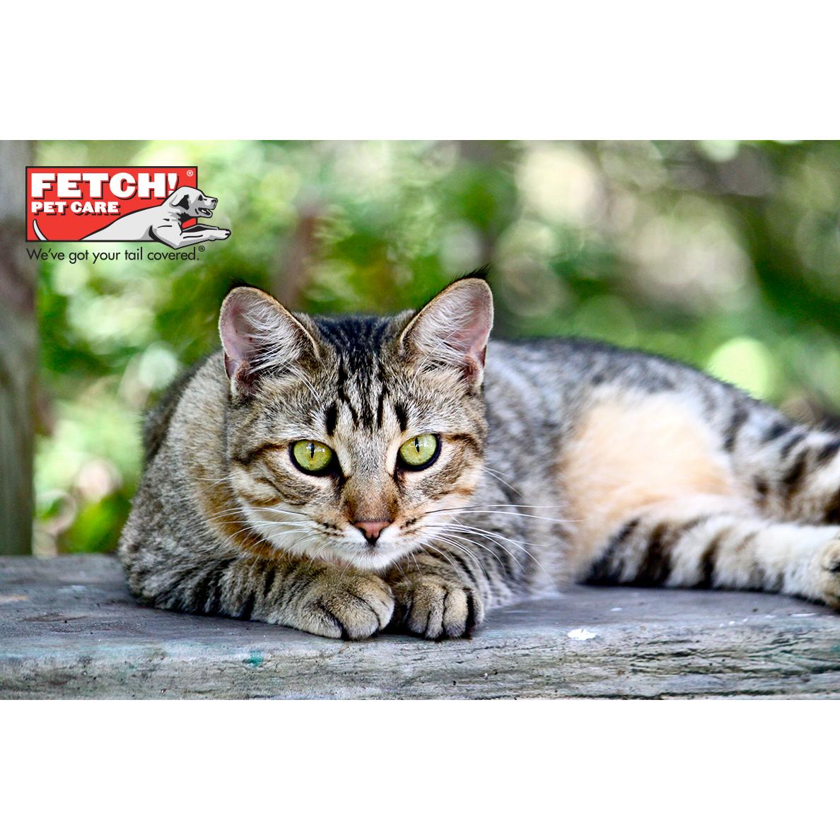 Fetch! Pet Care image 0