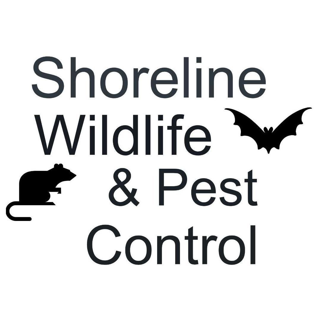 Shoreline Wildlife and Pest Control llc image 10