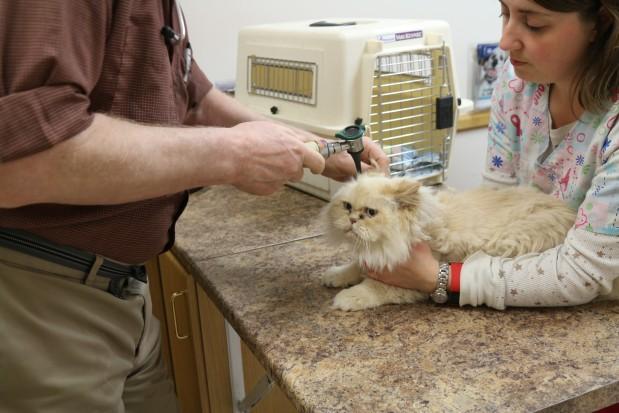 Broadway Veterinary Clinic image 0