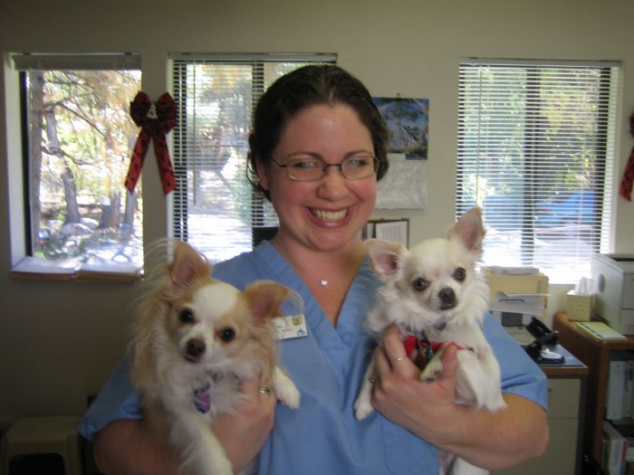 VCA Thumb Butte Animal Hospital Coupons near me in ...