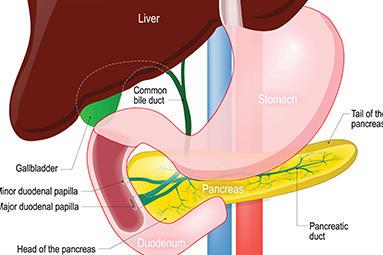 Advanced Gastroenterology image 1