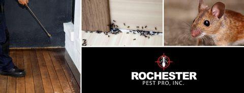 Rochester Pest Pro