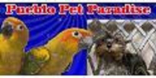 Pueblo, CO pet paradise grooming | Find pet paradise ...