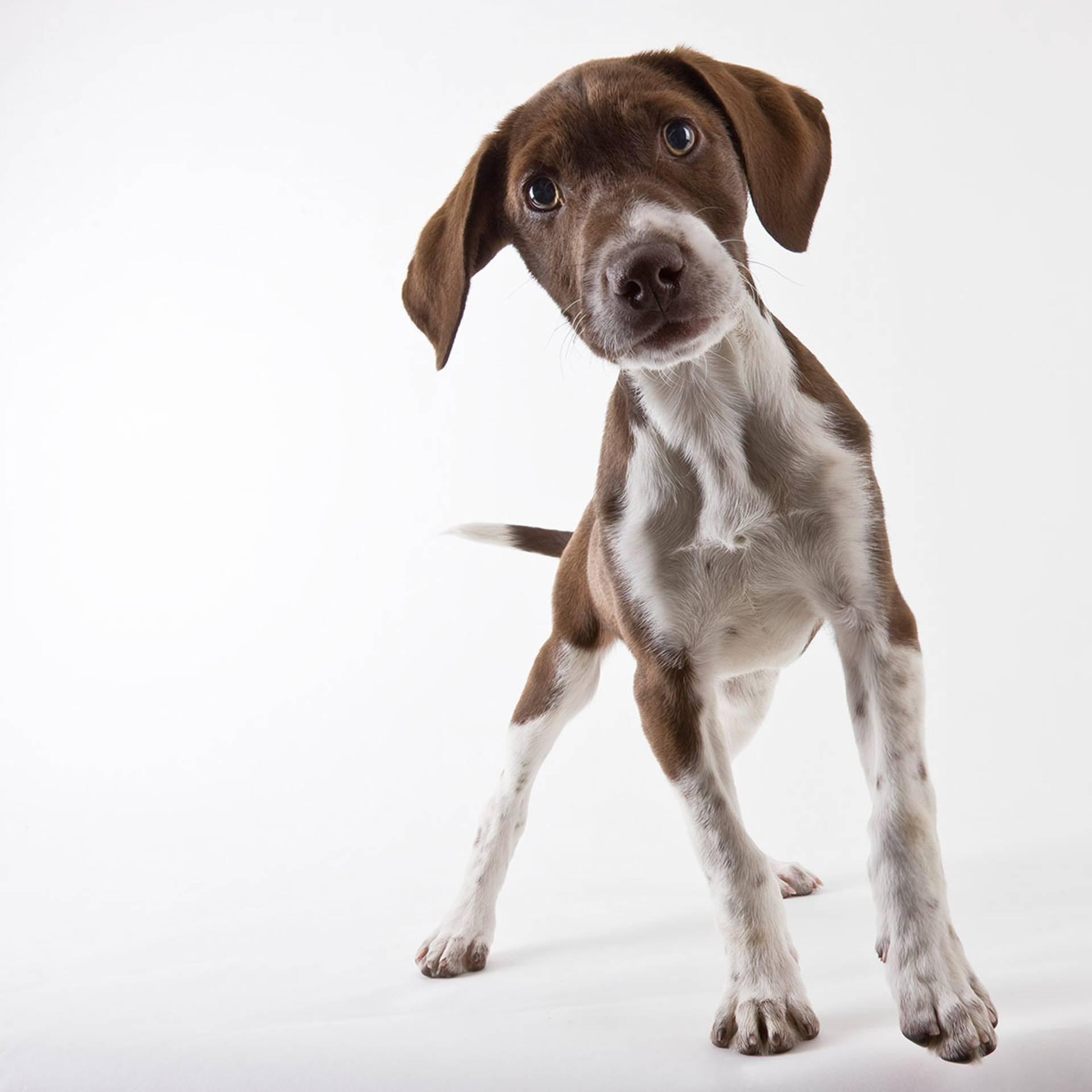 AG Dog Training and K9 Concierge image 1