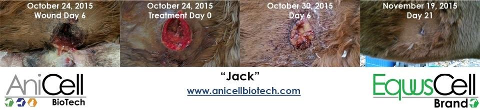 AniCell Biotech, LLC image 2
