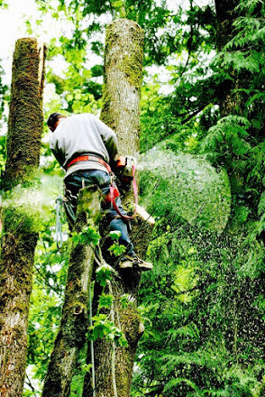 Cavall's Tree Service image 0