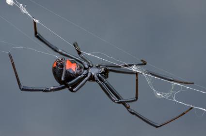 Ben the Bug Man, A-1 Pest Control Inc. image 3