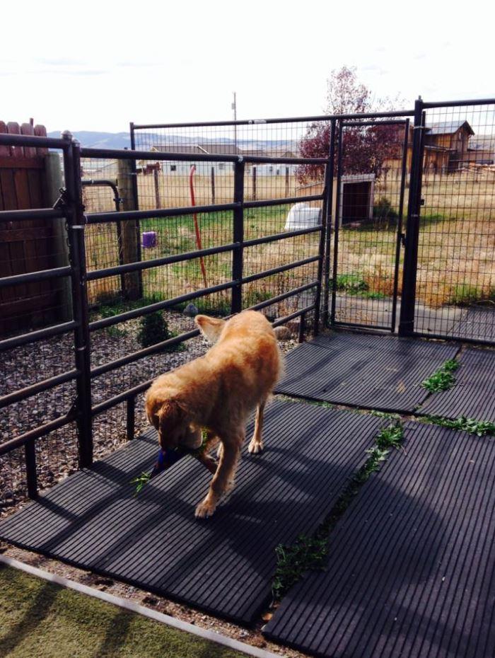 Doggie Daycare & Motel image 5