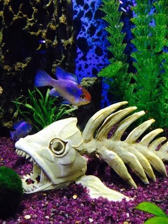 Sierra Fish and Pets - (425) 226-3215 - http://sierrafishandpets.com