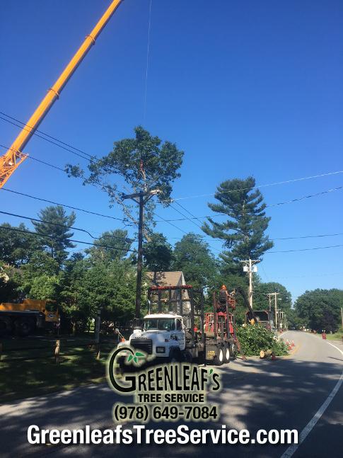 Greenleaf's Tree Service image 43