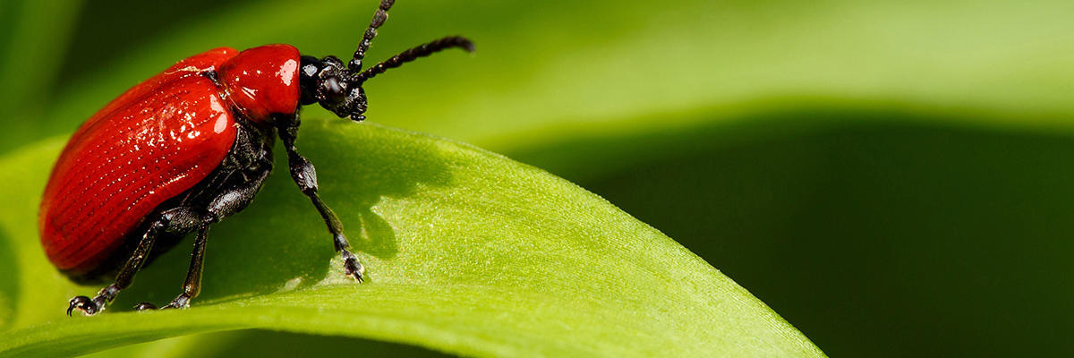 The Bug Man Inc image 0