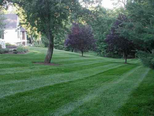 Go Green Landscapes LLC image 0