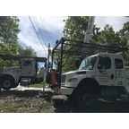 Action Tree Service image 0