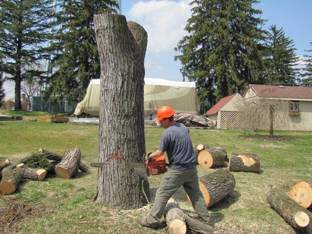 RECON Tree Service image 1