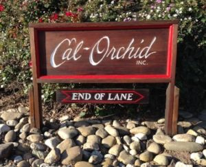 Cal-orchid Inc image 5