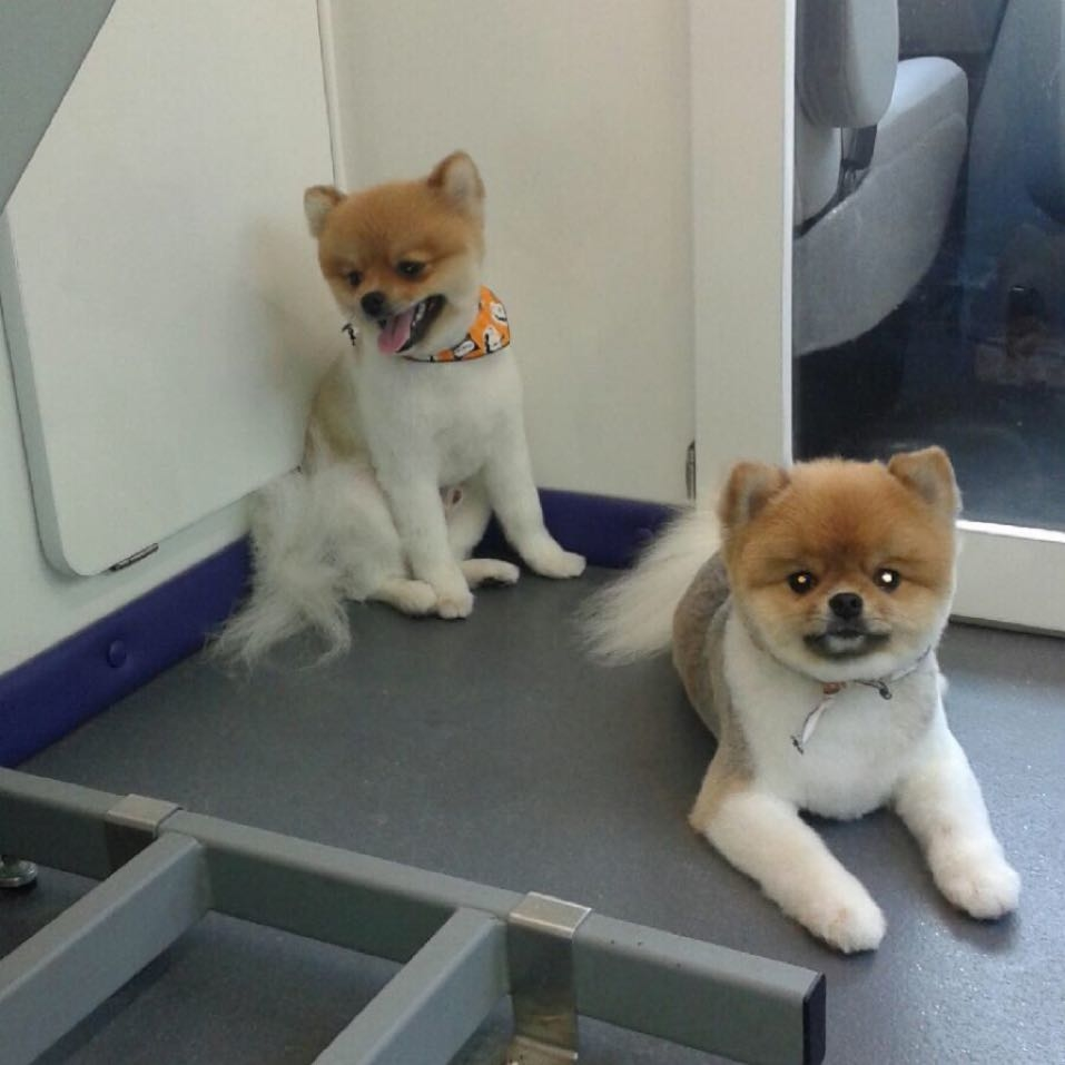 Le Paw Spa Mobile Pet Grooming image 1
