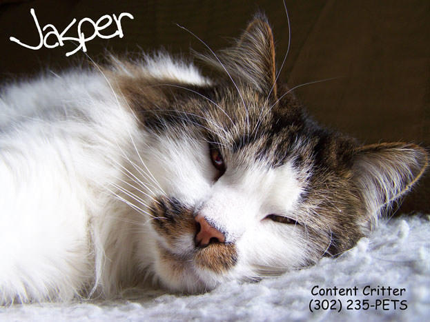Content Critter - Pet Sitters & Dog Walking image 2