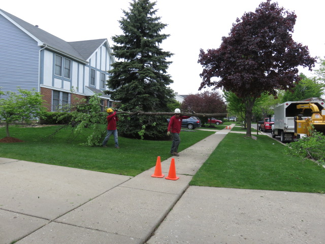 Rivas Tree Service image 3