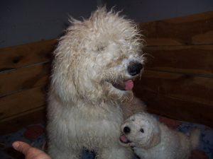 Southfork Puppies image 2