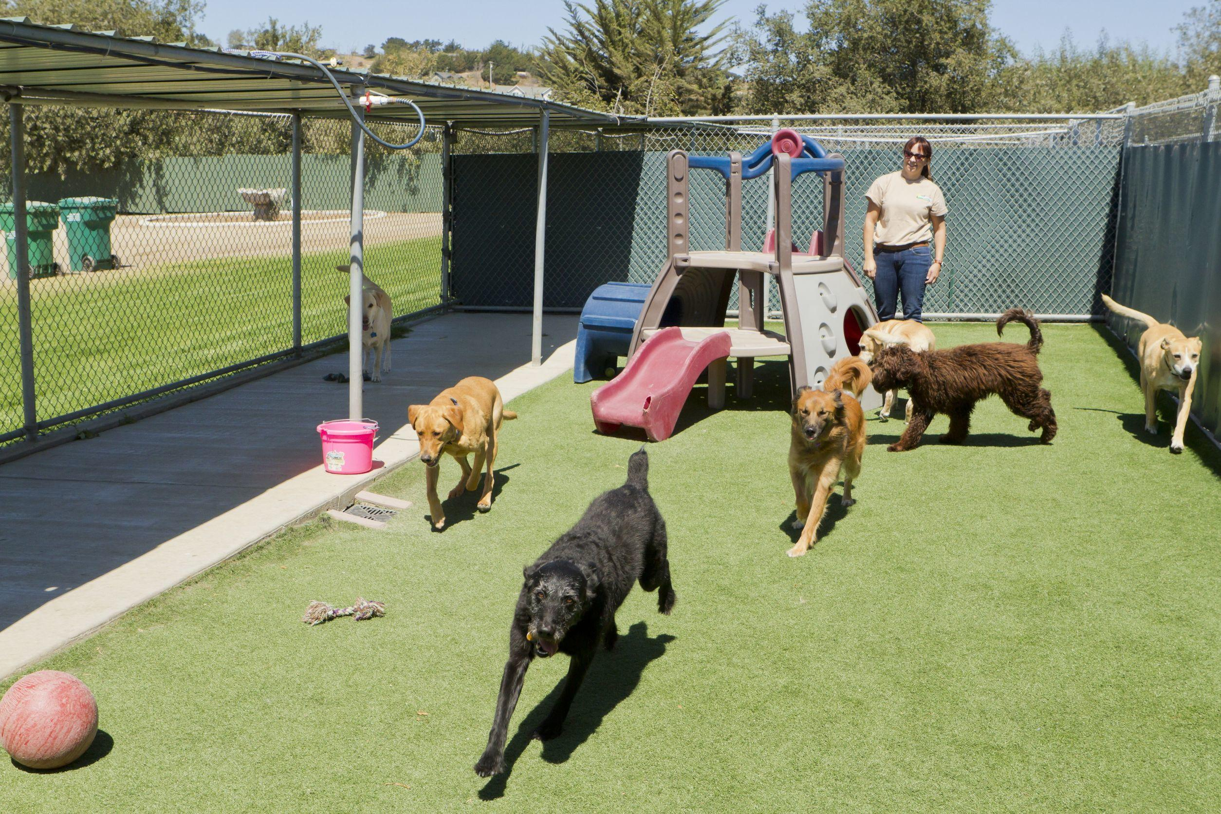 Pup Culture image 4
