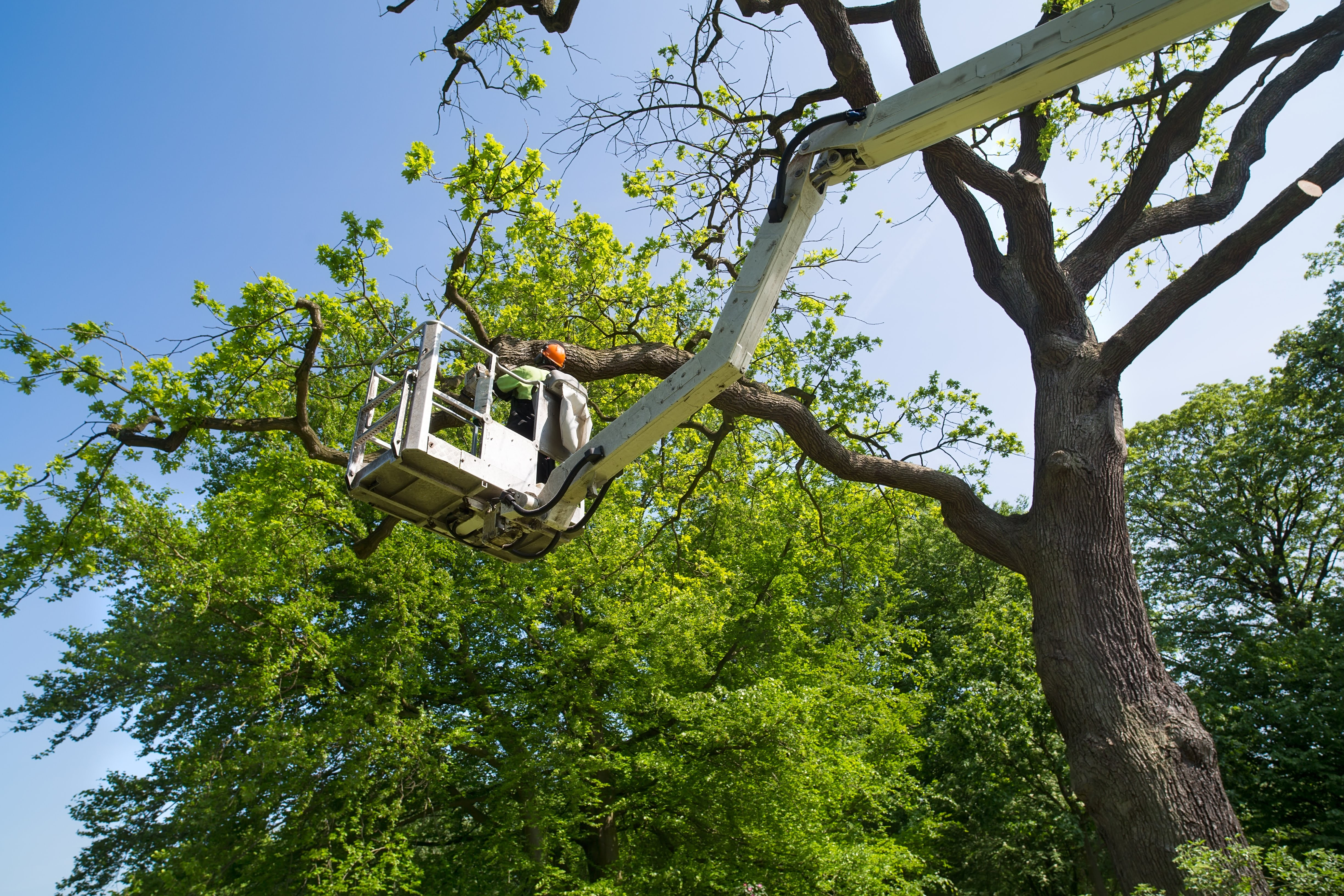 Tip Top Tree Care, LLC