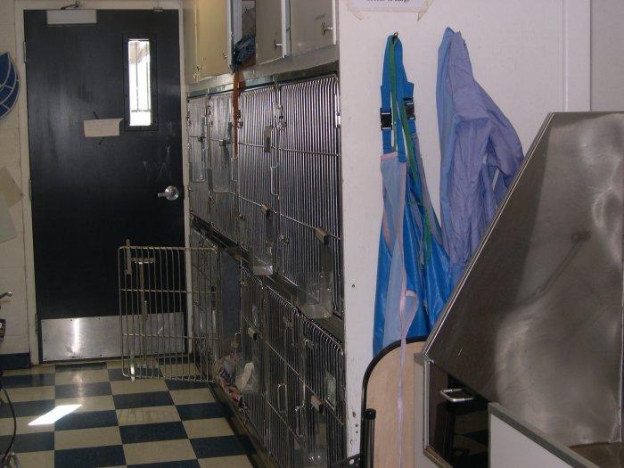 VCA American River Animal Hospital in Orangevale, CA, photo #5