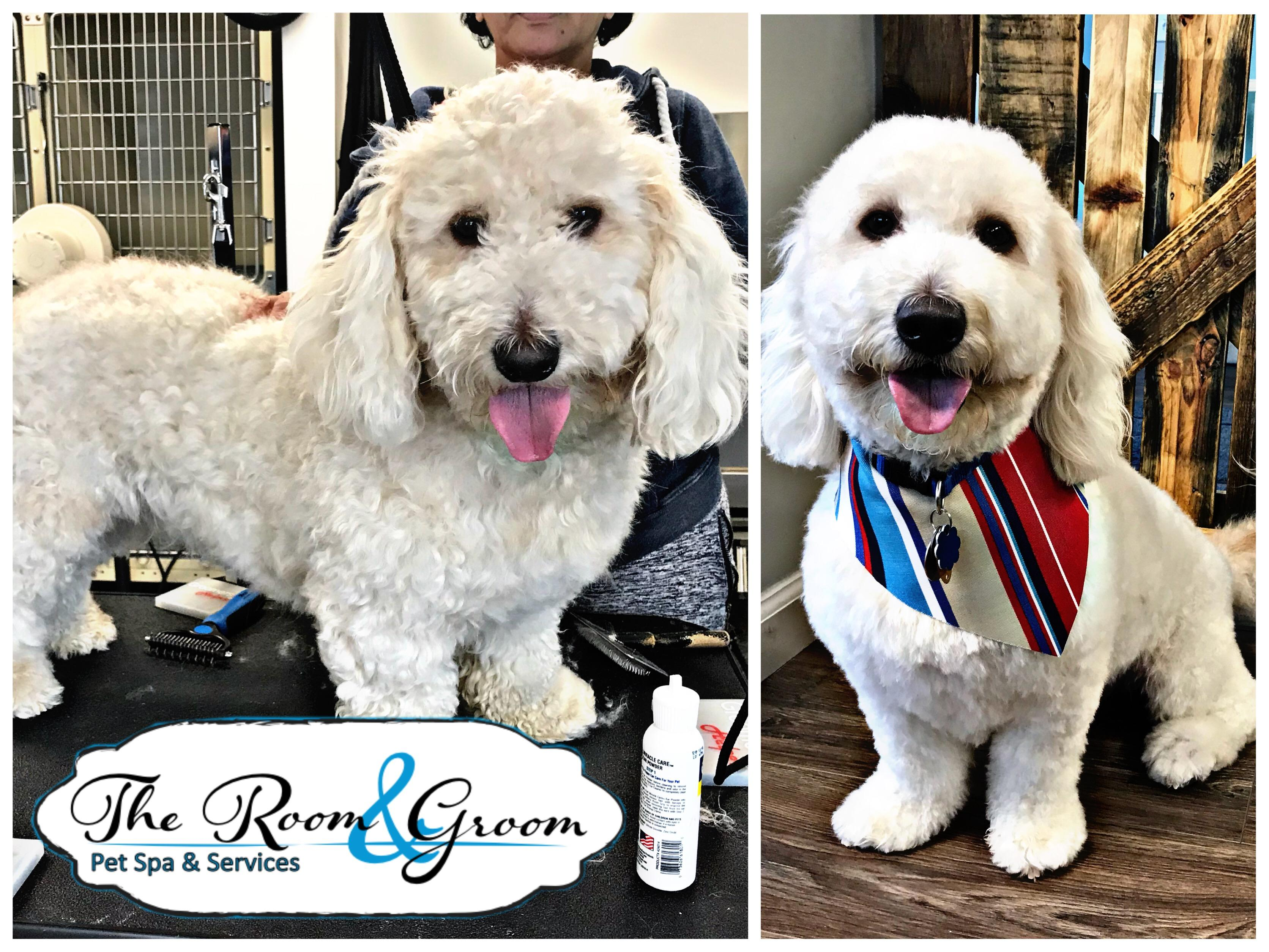 The Room & Groom, Pet Spa & Services image 33