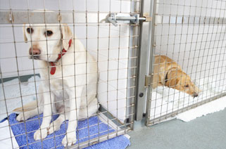 Animal Medical Center image 7