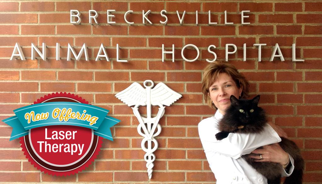 Brecksville Animal Hospital in Cleveland, OH, photo #2